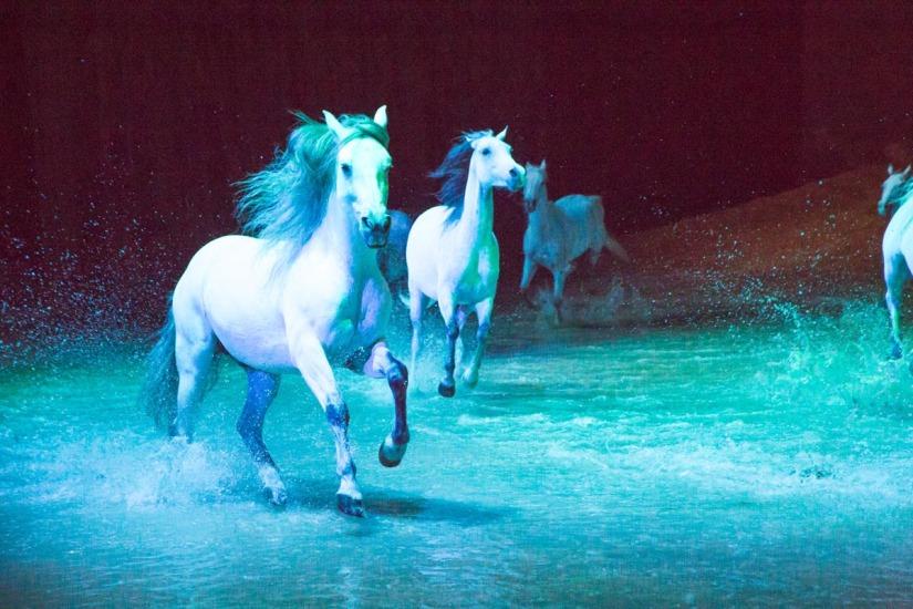 25-Scottsdale-AZ-Opening-Night-Cavalia-Odysseo-La-Grande-Aventure